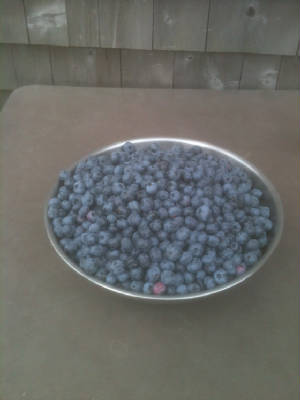 IMG_0869Blueberries.jpg